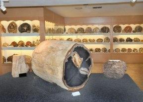 ricemuseum_large3