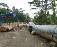 woodfossilindo