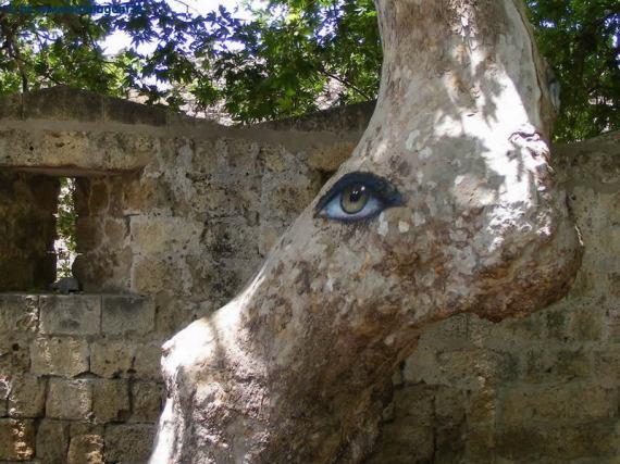 Drvo sa okom