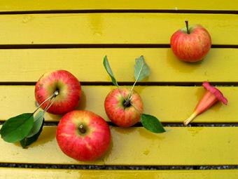 Jabuke i cvet 3