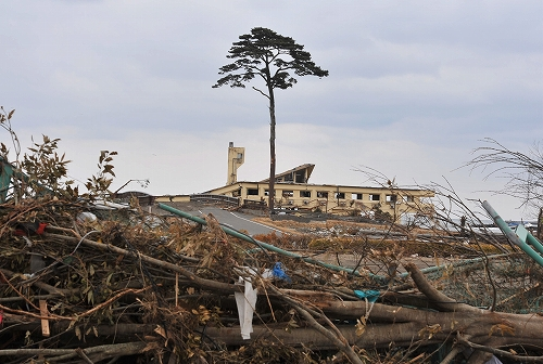 pain-tree-japan-tsunami