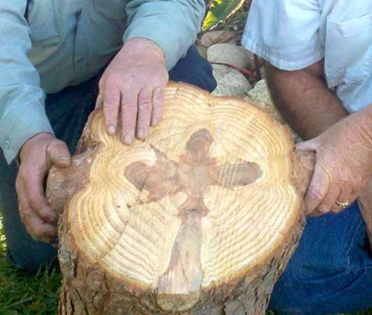 cross-in-tree