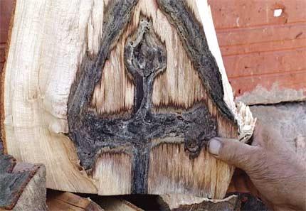 krst-drvo1109