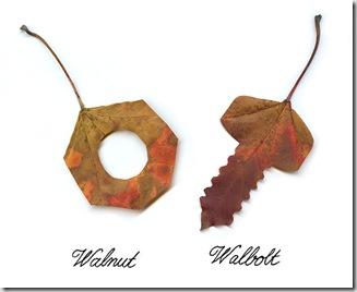 Leaf1_thumb2