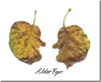 leaf4_thumb3