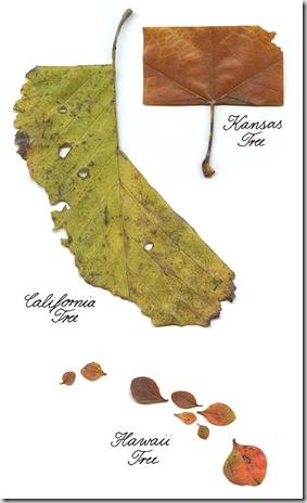 leaf5_thumb[1]