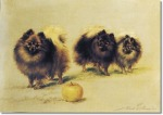 maud-earl-pomeranians-with-apple-1904-approximate-original-size-18x24-sporting-equine-canine-paintings-prints-art-artist