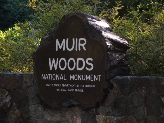 Muir_Woods_National_Monument_08
