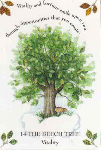 TreeMagicBeech