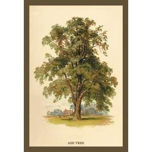131730184_framed-black-poster-printed-on-20-x-30-stock-ash-tree-