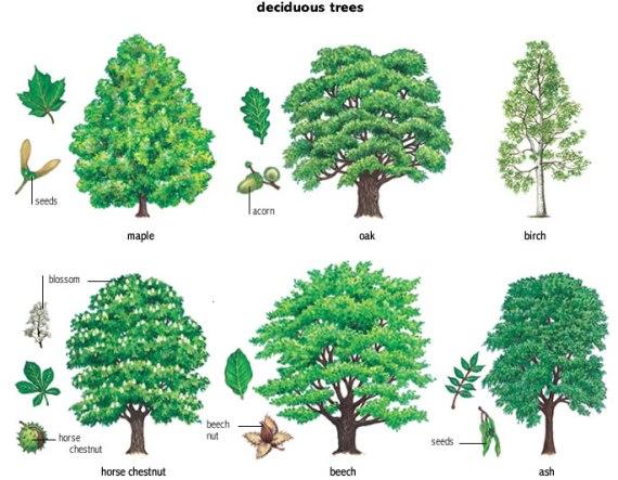 deciduous_trees
