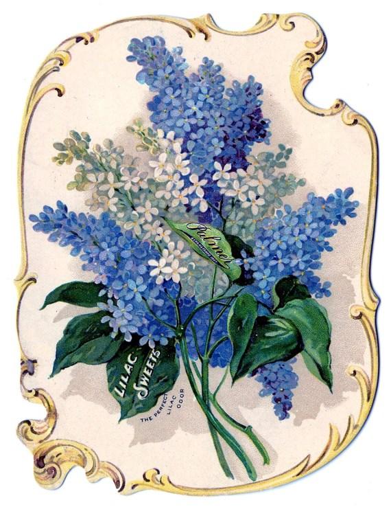 lilac-flower-clip-art-7