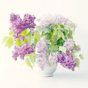 Lilac-flowers-bouquet-300x300
