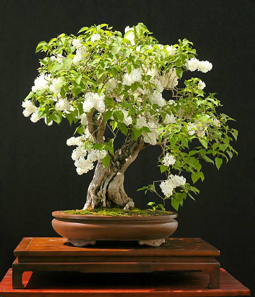 pall_garden_lilac_001