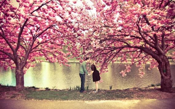 sakura-tree-flower-spring