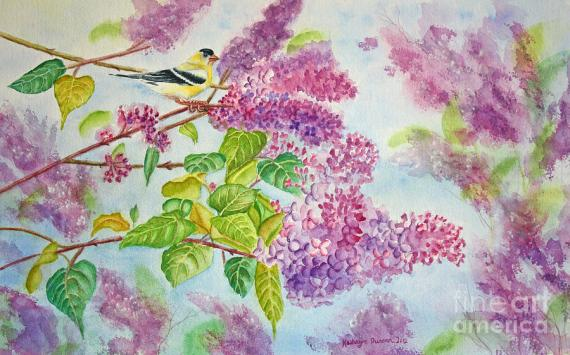 summertime-arrival-ii-goldfinch-and-lilacs-kathryn-duncan