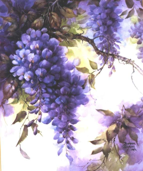 wisteria (1)