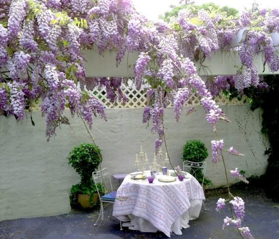 wisteria chic provence