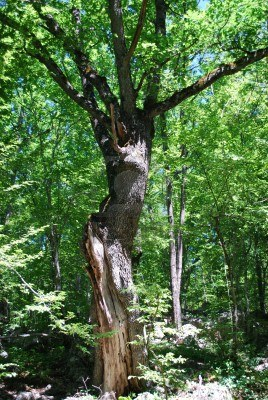 3425849-donna-forma-di-albero