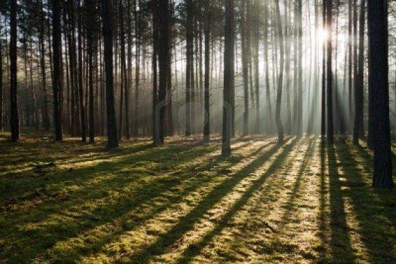 9338863-nebbiosa-vecchia-foresta-nebbiosa
