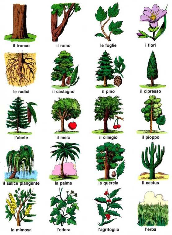 alberi10 (1)