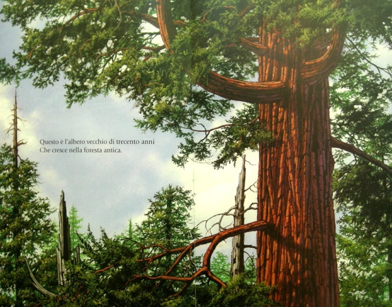 alberoforesta