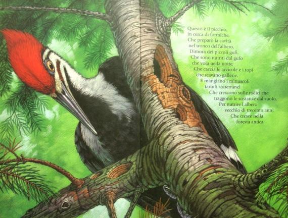alberoforesta3