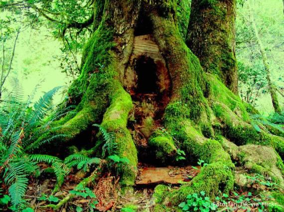 cannibal tree oregon