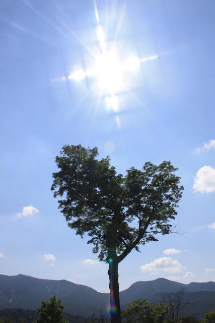 heart-tree-sarah-nelson