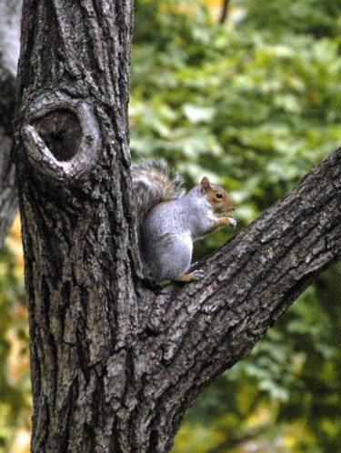 squirrel-at-home
