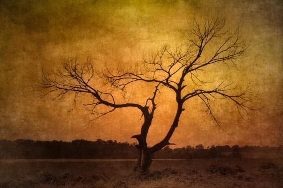 1207082126381dead_tree