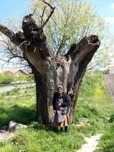 Baka-i-drvo
