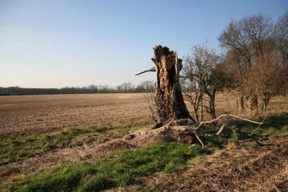 Decaying_tree_stump_-_geograph.org.uk_-_693986