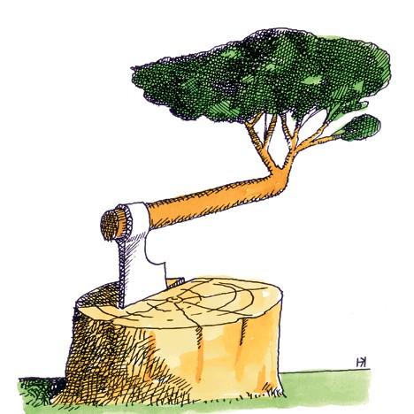 Kocic,-drvo