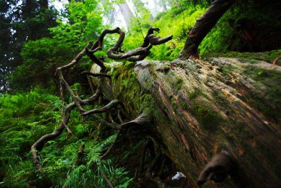 old_forest_by_vefantur-d48zh8n