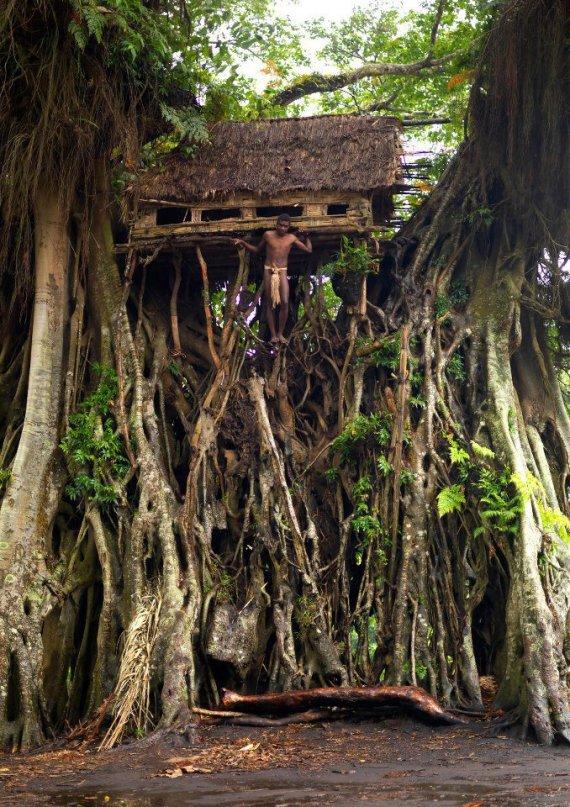 tree house Tanna island Vanuatu