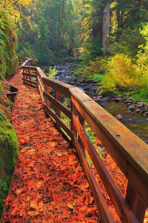 A beautiful walking trail along a stream in Oregon.