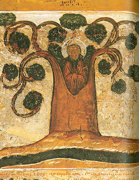 st paul of obnora living in a linden tree