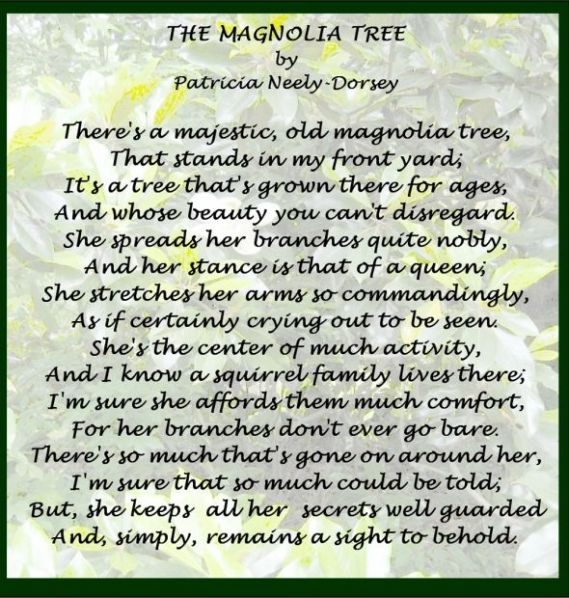 draft_lens4943152module68356851photo_1258077929The_Magnolia_Tree_Poem_by_Patricia_Neely-Dorsey