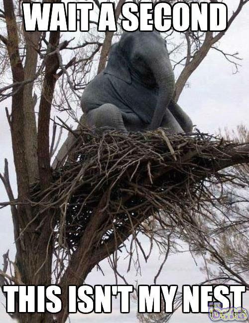 Слон и дрво